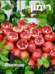 Pomegranate רימון