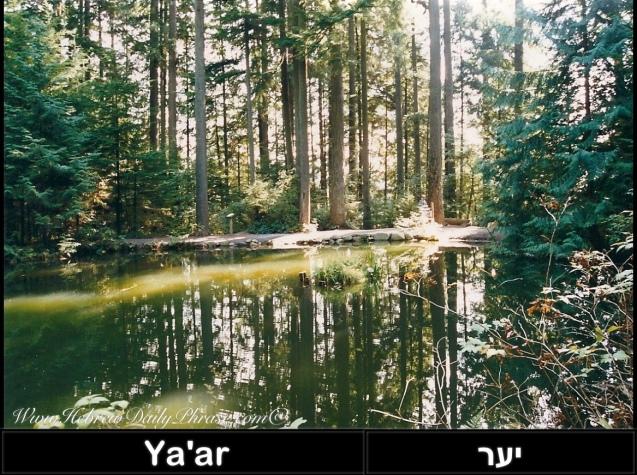 Forest ya'ar יער
