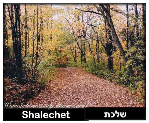 falling leaves shalechet שלכת