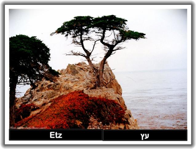 tree etz עץ